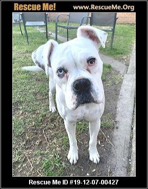Australia Boxer Rescue Adoptions Rescue Me