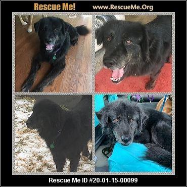 Michigan Mutt Rescue Adoptions Rescue Me