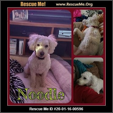 Texas Poodle Rescue Adoptions Rescue Me
