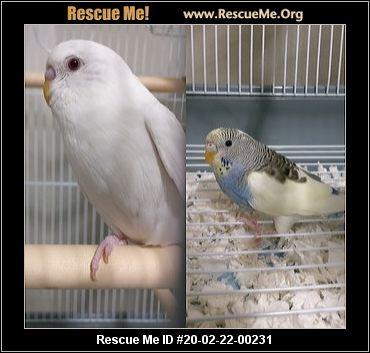 Oregon Pet Bird Rescue Adoptions Rescue Me