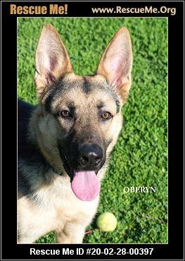 Oregon Dog Rescue Adoptions Rescue Me