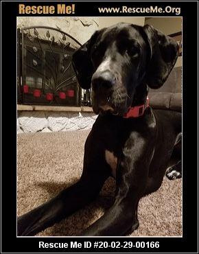Oregon Great Dane Rescue Adoptions Rescue Me