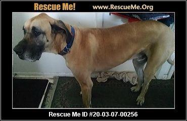 Illinois Great Dane Rescue Adoptions Rescue Me