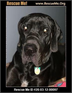 Ohio Great Dane Rescue Adoptions Rescue Me