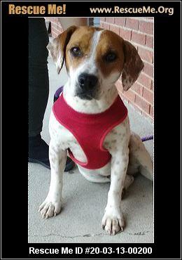 Kentucky Beagle Rescue Adoptions Rescue Me
