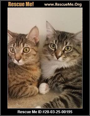 Arizona Cat Rescue Adoptions Rescue Me