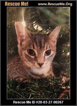 - Virginia Cat Rescue - ADOPTIONS - Rescue Me!