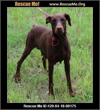 Texas Dog Rescue Adoptions Rescue Me