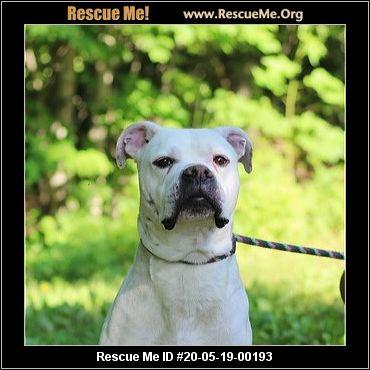 Virginia Dog Rescue Adoptions Rescue Me