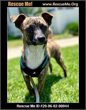 California Mutt Rescue Adoptions Rescue Me