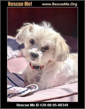 California Poodle Rescue Adoptions Rescue Me