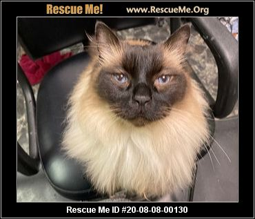 Maryland Ragdoll Rescue Adoptions Rescue Me