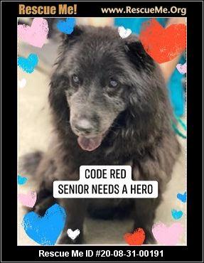 Nevada Dog Rescue Adoptions Rescue Me