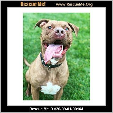 Ohio Dog Rescue Adoptions Rescue Me