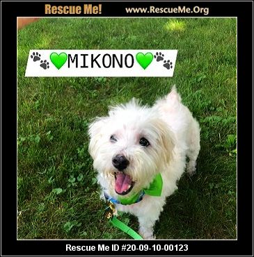New Jersey Dog Rescue Adoptions Rescue Me