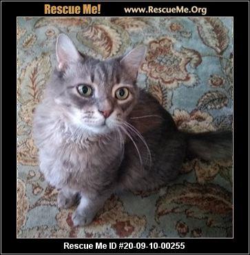 North Carolina Maine Coon Rescue Adoptions Rescue Me