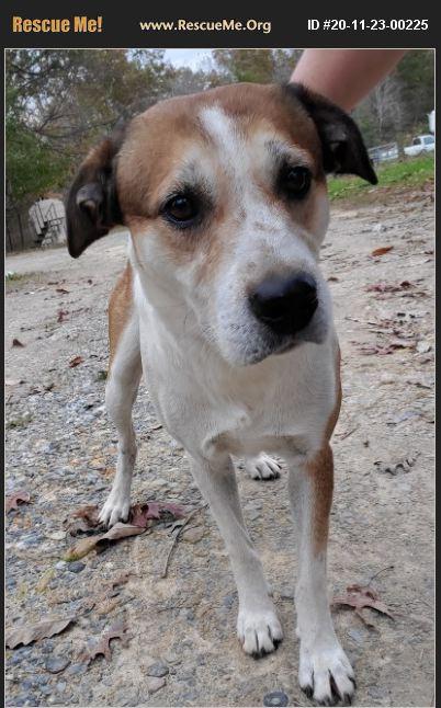 ADOPT 20112300225 ~ Australian Shepherd Rescue ~ Cherokee ...