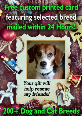 Florida Beagle Rescue Adoptions Rescue Me