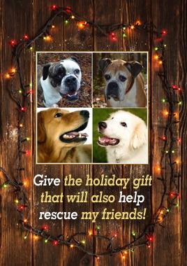 Rhode Island Dog Rescue Adoptions Rescue Me