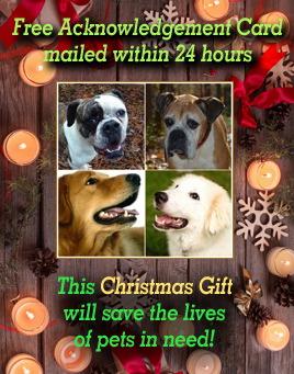 Pennsylvania Dog Rescue Adoptions Rescue Me