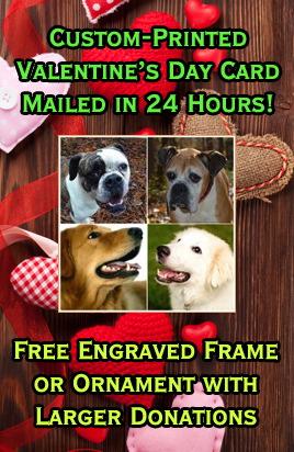 Washington Dog Rescue Adoptions Rescue Me