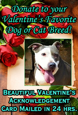 Indiana American Staffordshire Terrier Rescue - ADOPTIONS