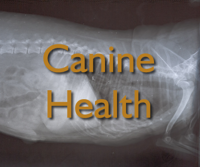How To Treat Dog Seizures Naturally