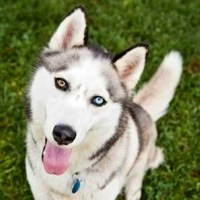 California Alaskan Malamute Rescue