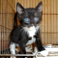 Ohio American Wirehair Rescue