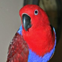Texas Pet Bird Rescue - ADOPTIONS - Rescue Me!