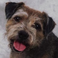 South Africa Border Terrier Rescue