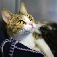 New Jersey Cat Rescue