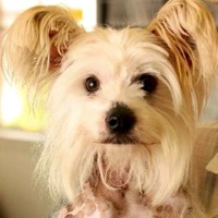 Louisiana Chinese Crested Rescue