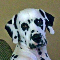 Louisiana Dalmatian Rescue