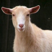 Oregon Farm Animal Rescue