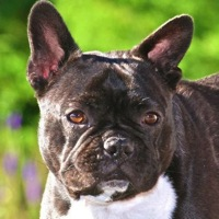 Ohio French Bulldog Rescue