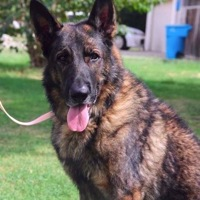 Israel German Shepherd Rescue