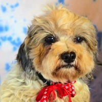 Texas Havanese Rescue