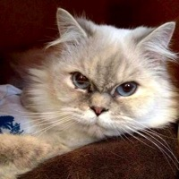 Wyoming Himalayan Rescue