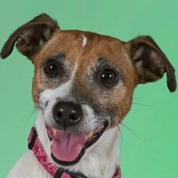 Louisiana Jack Russell Rescue