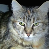 South Carolina Maine Coon Rescue