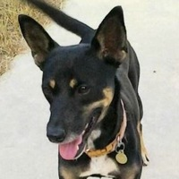 Manchester Terrier Rescue