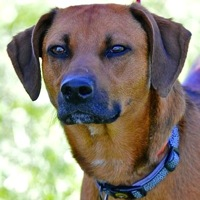 Michigan Mountain Cur Rescue