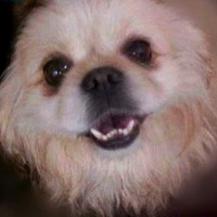North Carolina Pekingese Rescue