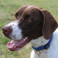 Virginia Pointer Rescue