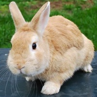 California Rabbit Rescue