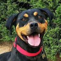 New Mexico Rottweiler Rescue