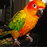 California Pet Bird Rescue - ADOPTIONS - Rescue Me!