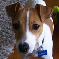 Craigslist Dog Adoption Rescue Orange County
