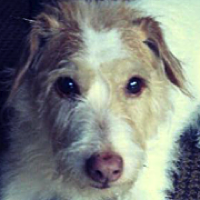 Wisconsin Mutt Rescue - ADOPTIONS - Rescue Me!